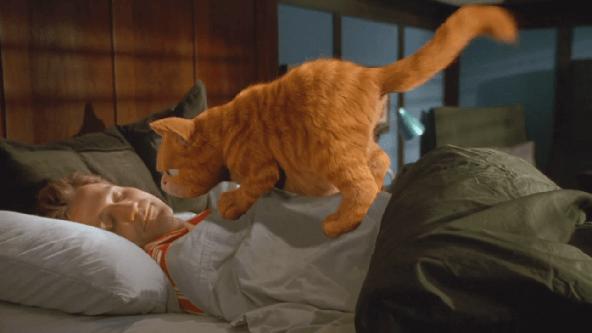 Garfield İndir